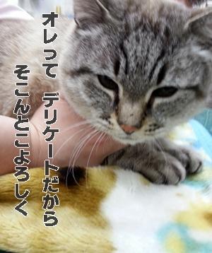 20130316_091211